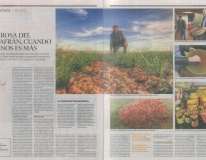 La Rosa del Azafrán, cuando menos es más - Artículo Heraldo de Aragón 22/01/2012